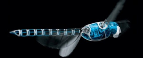 Con el fin de ahorrarse varios años de investigación, el ser humano actualmente recurre continuamente a la bioinspiración (diseño inspirado en los seres vivos). Para muestra del potencial que puede […]