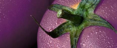 Hace un año científicos del Centro Jhon Innes en Norfolk, lograron descifrar los genomas del tomate, esperando que algún día esta fruta pudiera ser modificada para beneficio del ser humano....